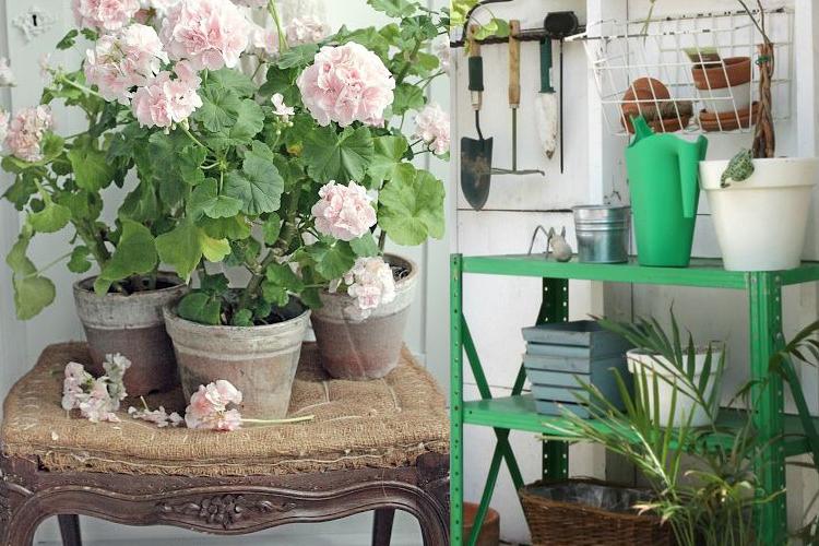 Cuidados del jard n en oto o e invierno alda propiedades for Cuidados del jardin